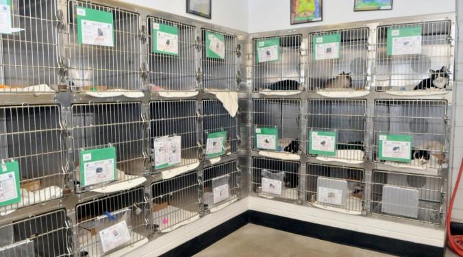 cat cage walls